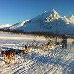 Dog Sledding - a breather