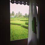 Window looking out to paddy fields