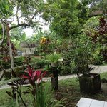                    Ibu&#39;s garden