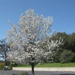  Tree in Spring