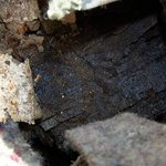                    Black mold and wood rot