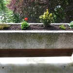                                      Little planter box on balcony