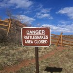 I've seen one rattlesnake on the paths.