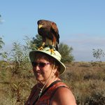 Added attraction Walking with Harris Hawk