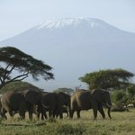 Photo of Kenya Expresso Tours And Safaris