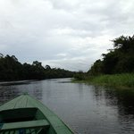                    View of Ariau River from canoe