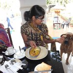 Breakfast with hotel's friendly dog