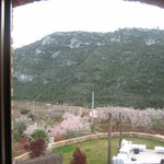 Almond trees in bloom out the window