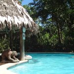 Jungle Pool with swim up bar