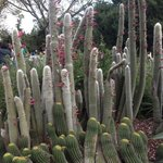  Cacti in bloom