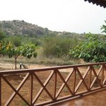 balcony facing the sloth bear sanctuary
