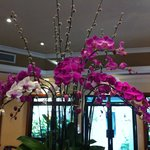                                      Orchids in Breakfast room