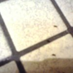 Ants in Bathroom floor.