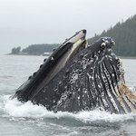 Hoonah Travel Adventures - Whale Watch