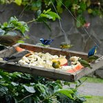 The bird feeder just outside of bungalow 1