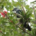 Tui's in the garden at Tower Road Motel