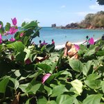  Bougainvillaea by the sea
