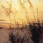 Sea Oat Sunset