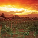  Sunset Over the Vineyards