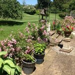                                      Summer garden at Spinney House