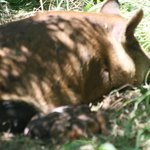 mother sow with two newborn piglets