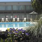  Poolside food or beverage service available.