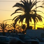 Ah! Palms silhouetted by Gold