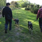 Walking Ace & Molly at nature reserve