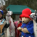  All the way from Peru! Pan pipers, Paddington and Llamas