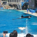 SeaWorld Adventure Park San Diegoの写真