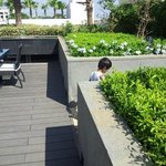 Roof garden around swimming pool