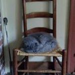 Sleeping cat in antique chair