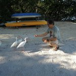  Beach and friendly ibises