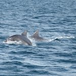  Dolphins at Jervis Bay