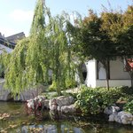  Dunedin  Chinese garden NZ