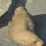 Seal sleeping in car park
