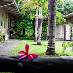Foto de African Lily Self Catering Family Suites
