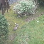  A grey squirrel outside our bedroom window