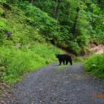  Bear in our Drive