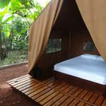  Private jungle tent