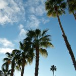 Picture of the Palms from across the hotel roof.