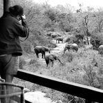  Elephants from the Londolozi Founders Camp Deck