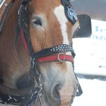 Couldn't resist - this was the horse that pulled us on our winter sleigh ride!