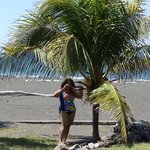  Palm tree wih coconuts