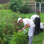  chef Eli and staff picking fresh herbs