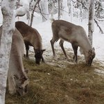  Beautiful hotel reindeers