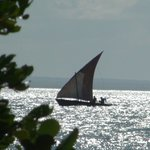  Dhow sail past the villa