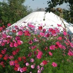 Bliss Cottage & Yurt
