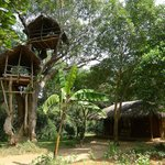 cabana with tree house
