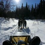 EarthSong Lodge Dog Mushing experience..